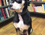 šunys bibliotekoje-6